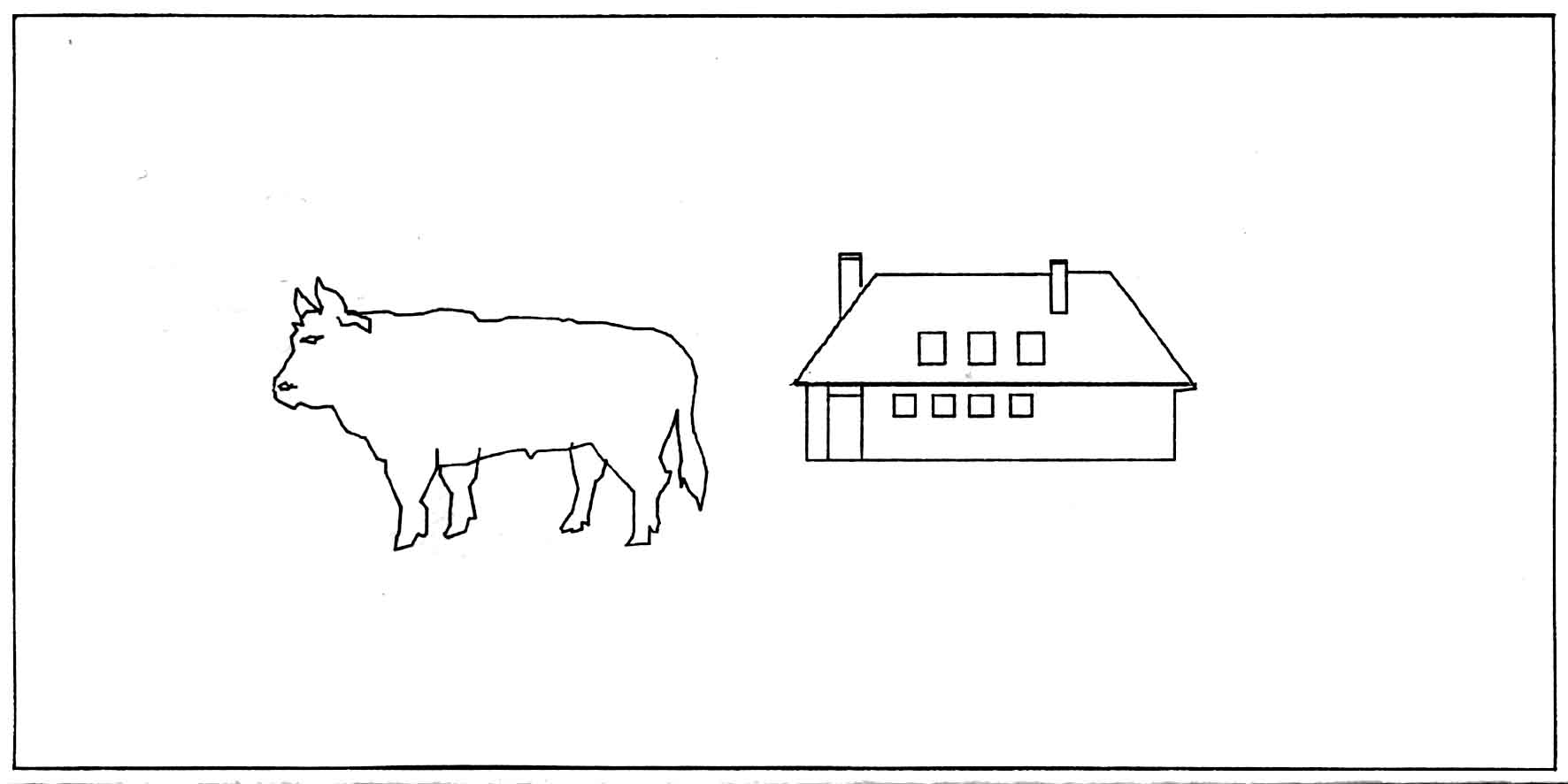 Was ist eine zwitter kuh